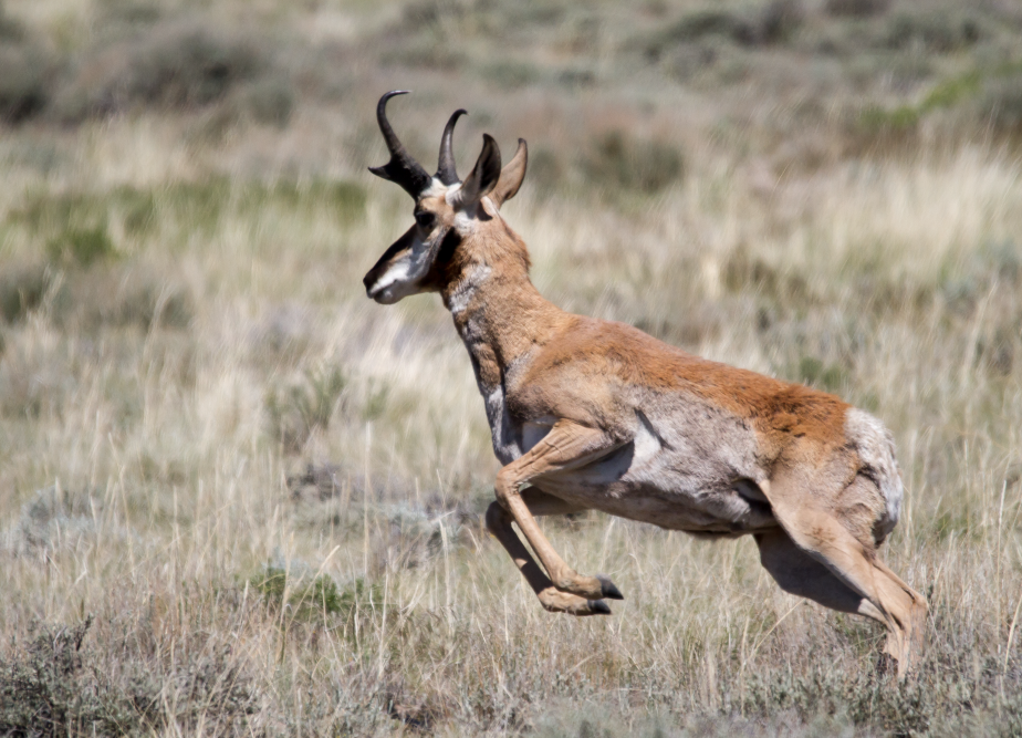 Were there Antelope on the Antelope Refuge? Yup!