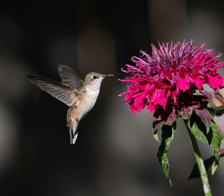 Providing for Pollinators